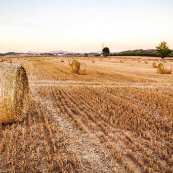 Agrilizia, rivalutazione dei terreni, un opportunità per tutti i professionisti!